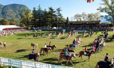 Stadl-Paura: Spitzenevent des internationalen Haflingersports