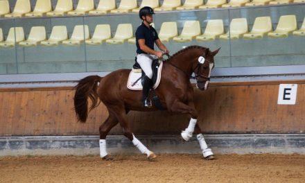 50-Tage-Test und Sporttest im Pferdezentrum Stadl-Paura