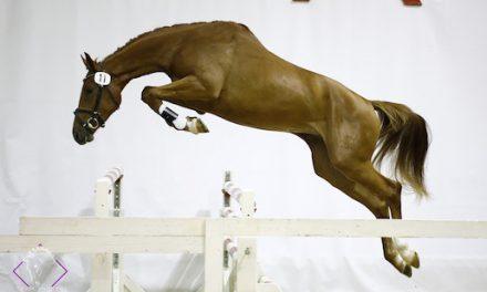 Startschuss zum heimischen Jahreshighlight in Pferdesport und -zucht