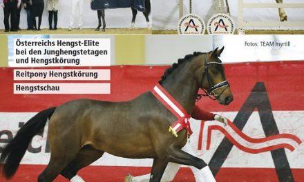 "AWÖ Hengsttage 2019: Prämierung des ""EQUIVA Junghengstes 2019"""