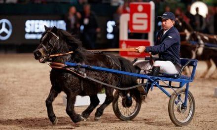 Zu Weihnachten das Pferdeglück verschenken – PARTNER PFERD bietet Ticket in die Welt der Pferde