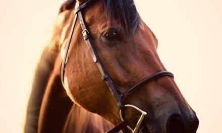 Diese Dinge sollte man vor dem Pferdekauf beachten