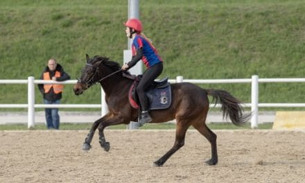Frühjahrstreffen der Mounted Games Reiter – Verein Mounted Games OÖ, Referat MG Verena Eichhorn am 6. Mai 2019