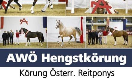 AWÖ Hengsttage 2020: Clipmyhorse.TV überträgt zeitversetzt